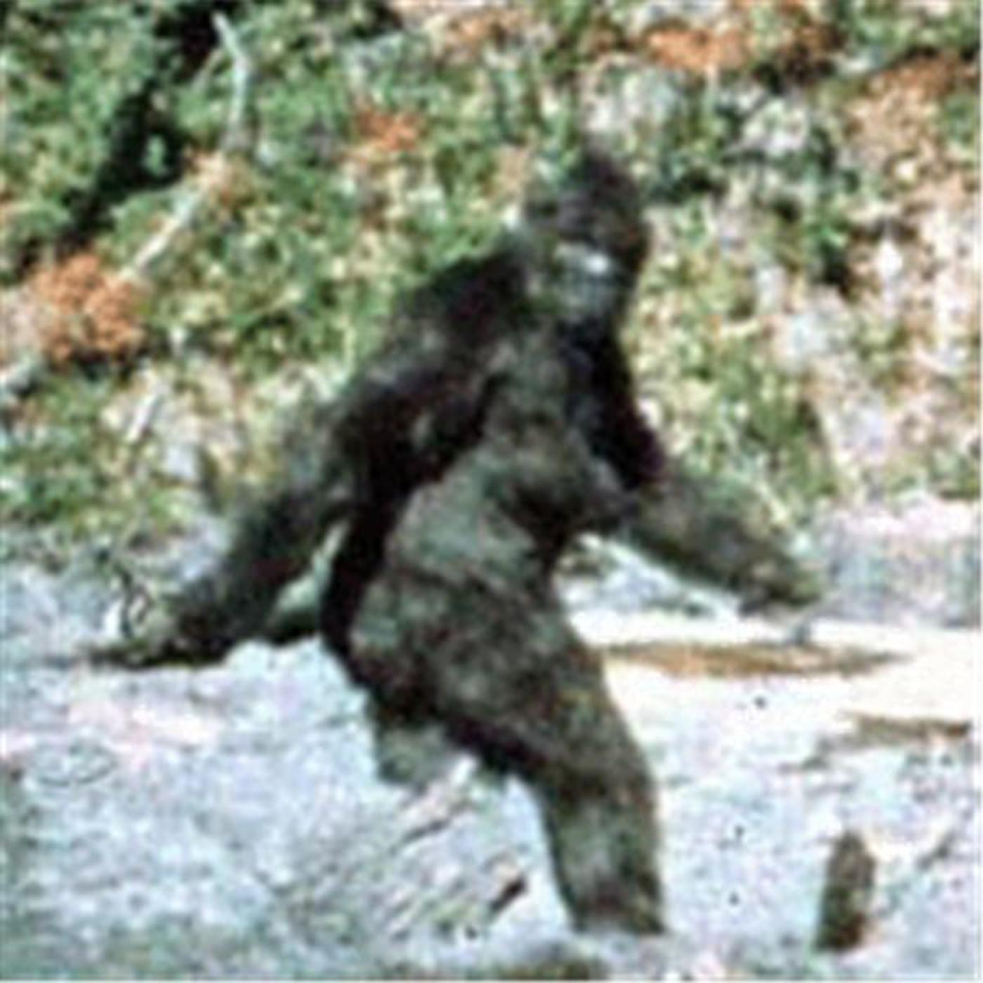 Mt. Hood Bigfoot Sighting with Shane Corson