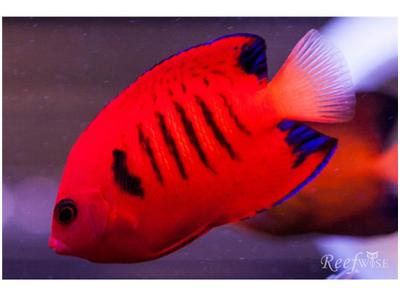 Life In The Ocean On Aw Tropical Fish From Hawaii And The