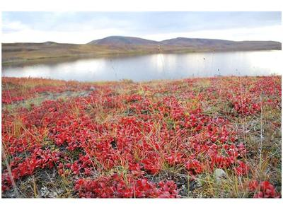 climate change in russia's arctic tundra Effects of human activities and climate change earth's tundra regions are harsh and remote, so fewer humans have settled there than in other environments  however, humans have a.